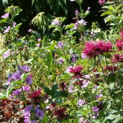 borderplanten