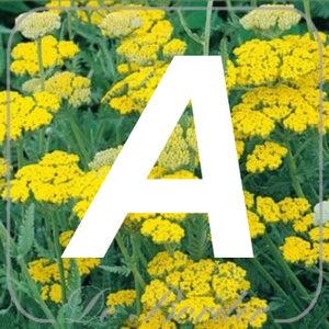 planten A