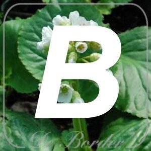 planten B