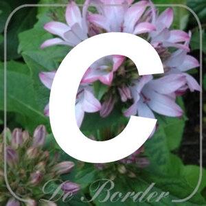 planten C