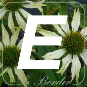 planten E