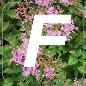 planten F