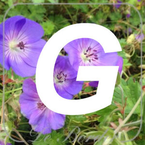 planten G