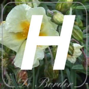 planten H