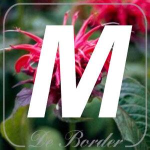 planten M