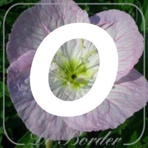 planten O