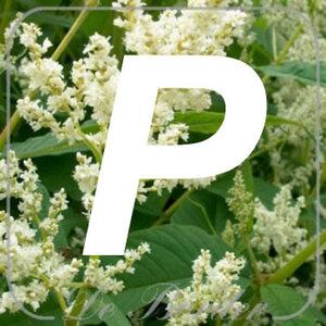planten P