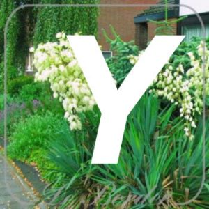 planten Y