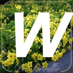 planten W