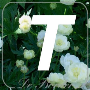planten T