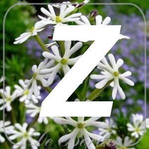 planten Z